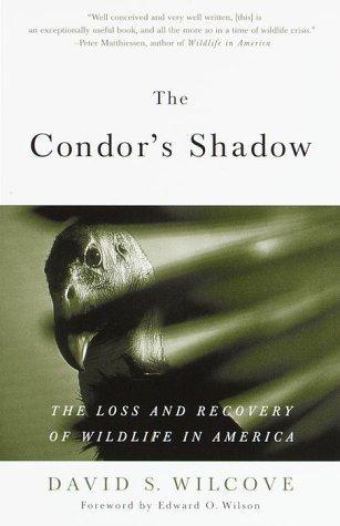 The Condor's Shadow