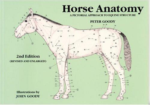 Download Horse Anatomy