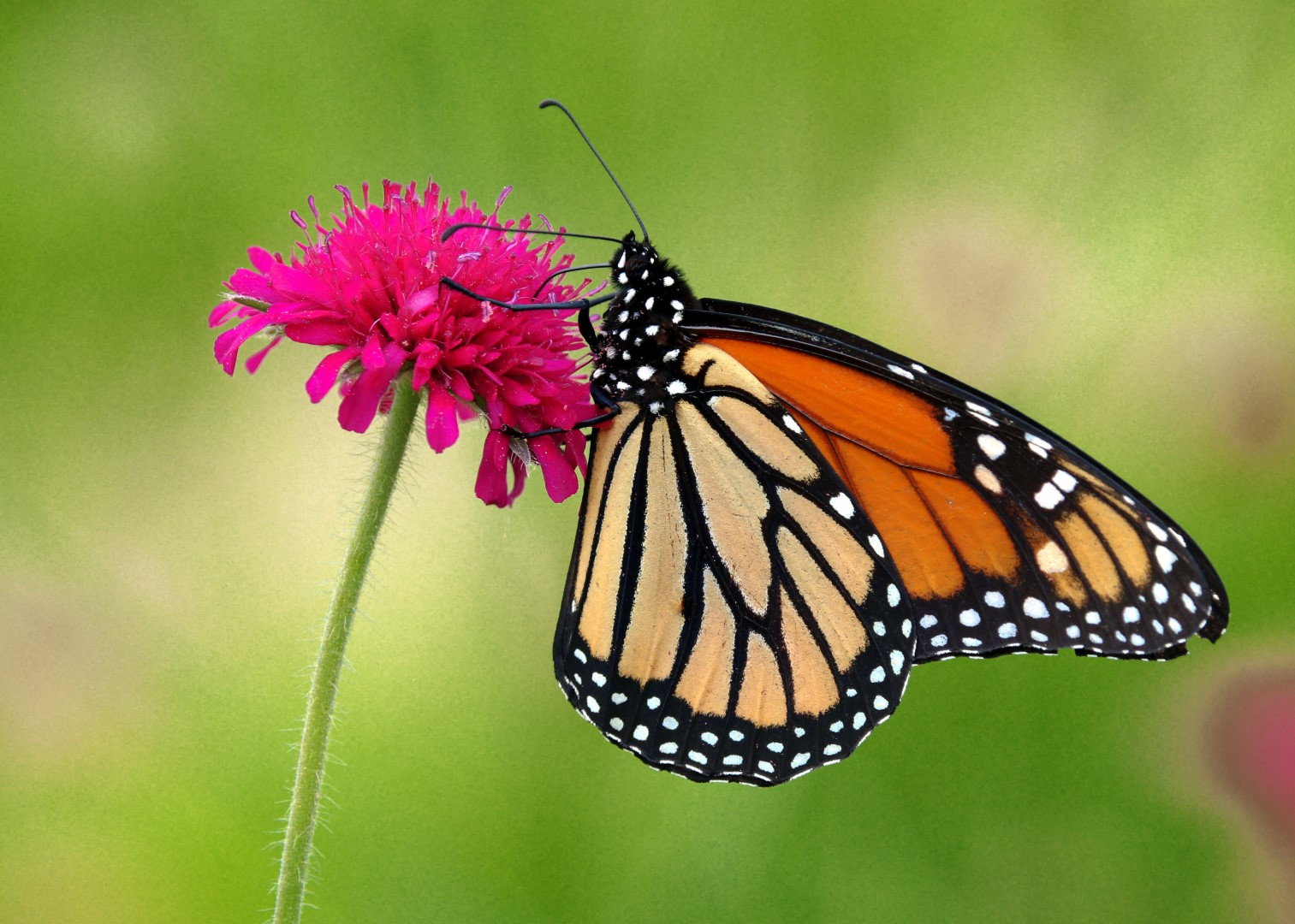 Morning Butterfly (photo)